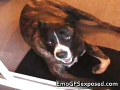 Real Slut Emo Doggyfucked In A Pool Table 2 By EmoGFSexposed
