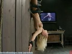 Hot Blond, bound upside down to wall with hard metal, made to cum