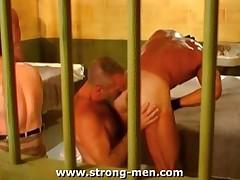 Orgy Bears