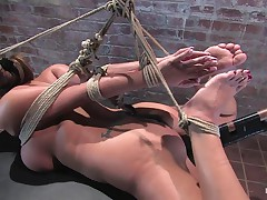 Hogtied: Trina Michaels
