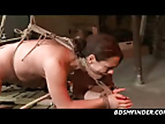 Tied Whipped And Toyed
